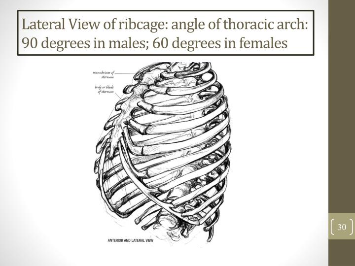Lateral View of ribcage: angle of thoracic arch: 90 degrees in males; 60 degrees in females