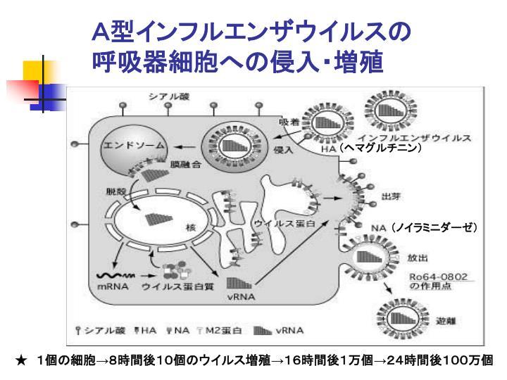 A型インフルエンザウイルスの