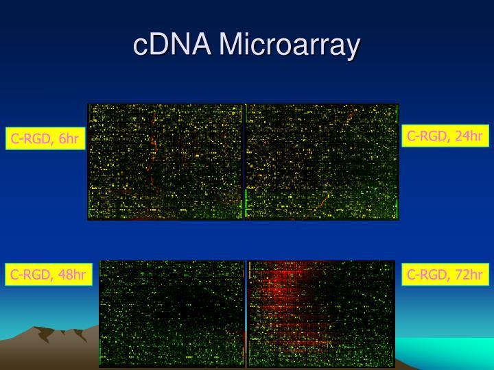 cDNA Microarray