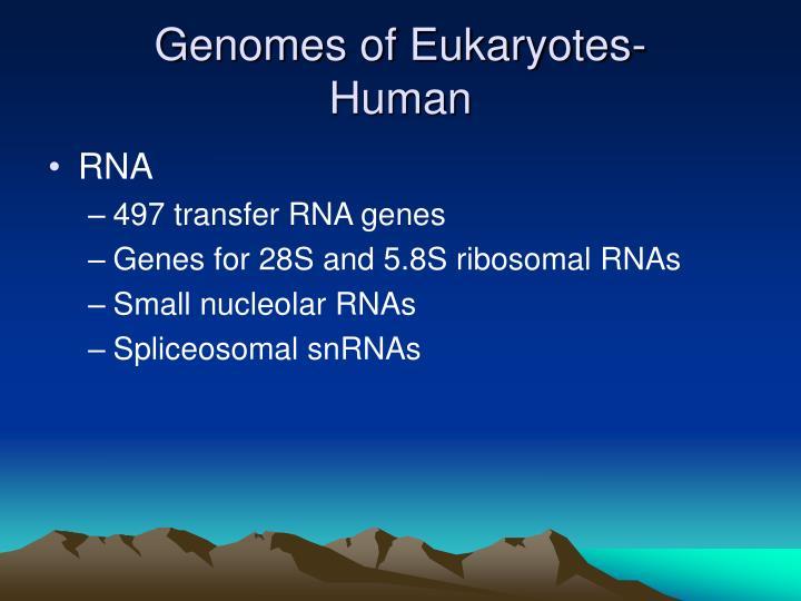 Genomes of Eukaryotes-