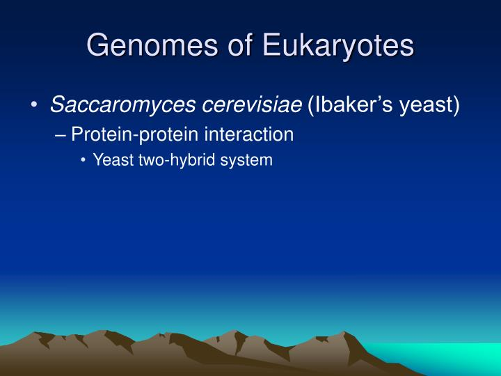 Genomes of Eukaryotes