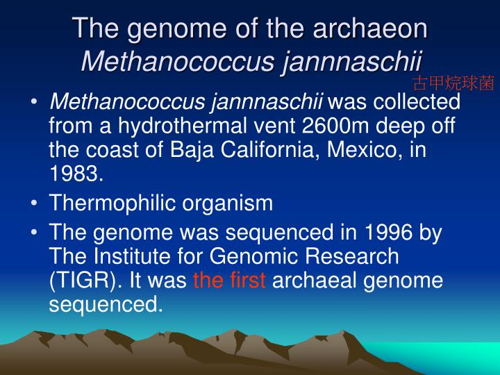 The genome of the archaeon