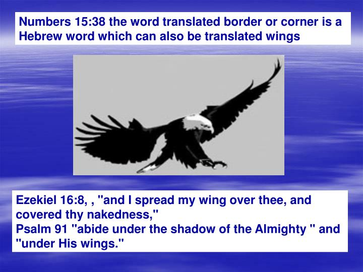 Numbers 15:38 the word translated border or corner is a Hebrew word which can also be translated wings