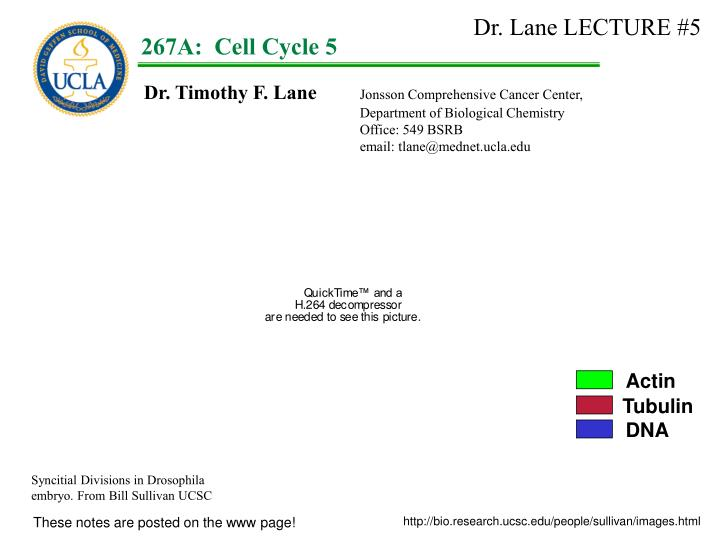 Dr. Lane LECTURE #5