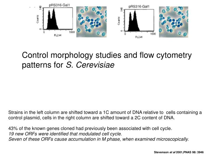 Control morphology studies and flow cytometry patterns for