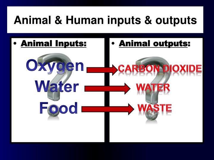 Animal Inputs: