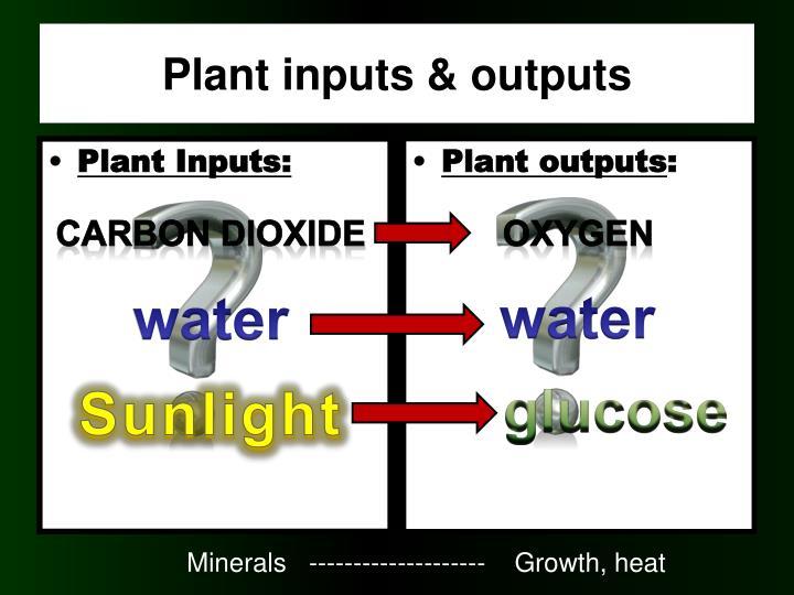 Plant Inputs: