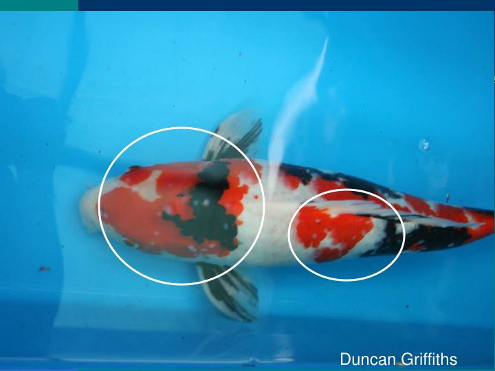 Duncan Griffiths