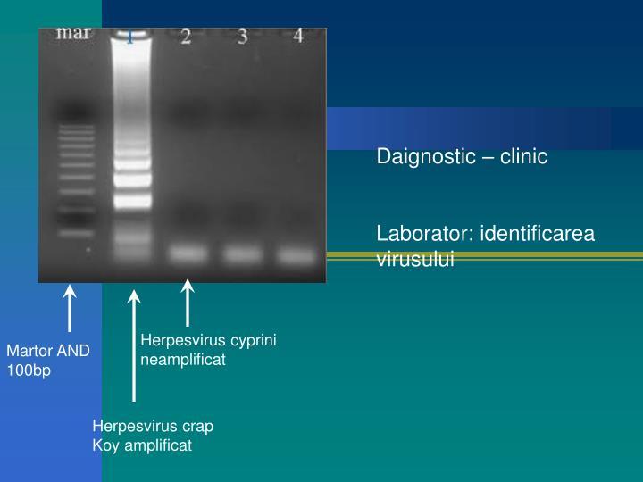 Daignostic – clinic