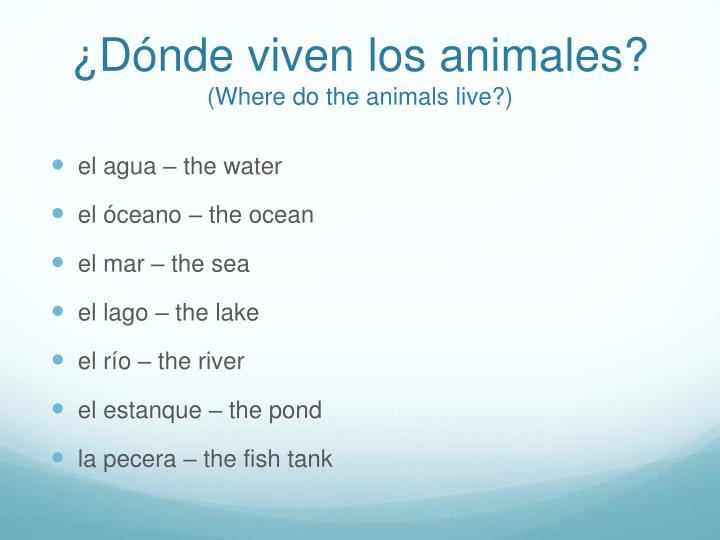 D nde viven los animales where do the animals live