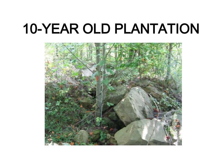 10-YEAR OLD PLANTATION