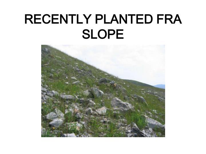 RECENTLY PLANTED FRA SLOPE