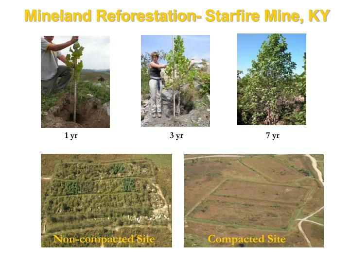 Mineland Reforestation- Starfire Mine, KY