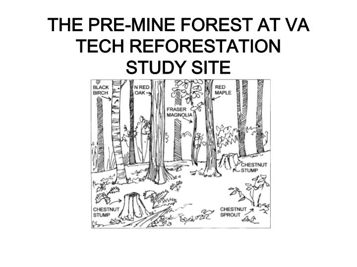 THE PRE-MINE FOREST AT VA TECH REFORESTATION
