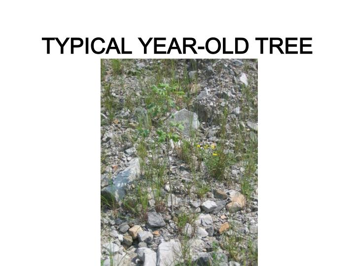 TYPICAL YEAR-OLD TREE