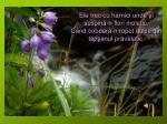 ele trec cu harnici unde i suspin n flori molatic c nd coboar n ropot dulce din t p anul pr v latic