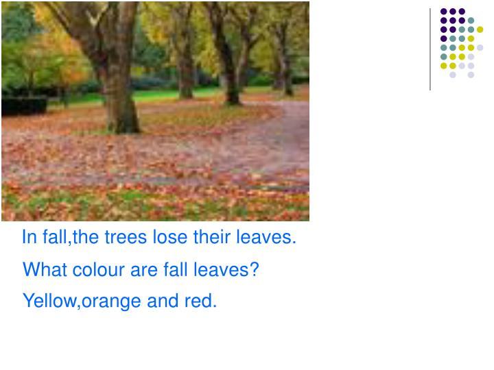 In fall,the trees lose their leaves.