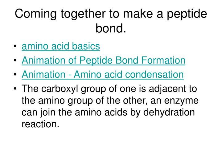 Coming together to make a peptide bond.