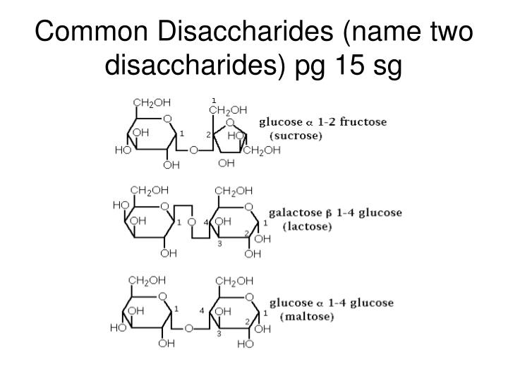 Common Disaccharides (name two disaccharides) pg 15 sg
