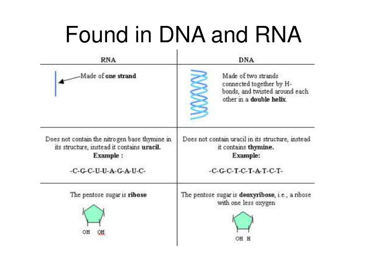 Found in DNA and RNA