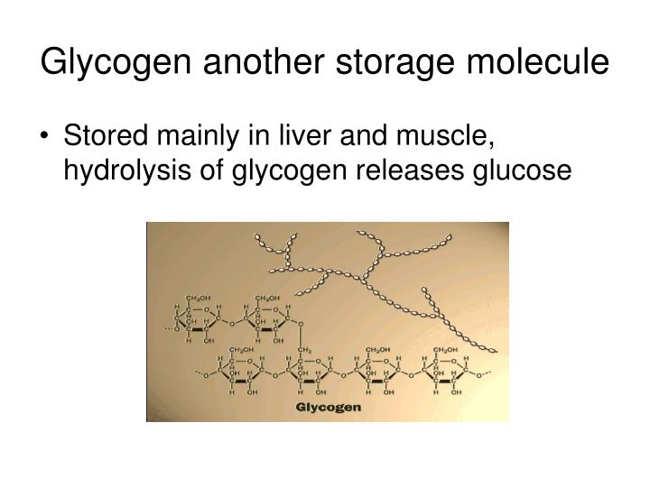 Glycogen another storage molecule