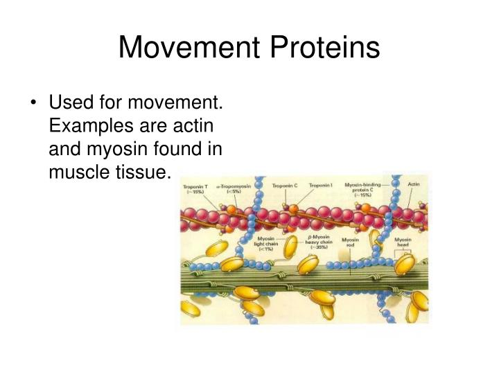 Movement Proteins