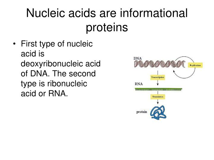 Nucleic acids are informational proteins