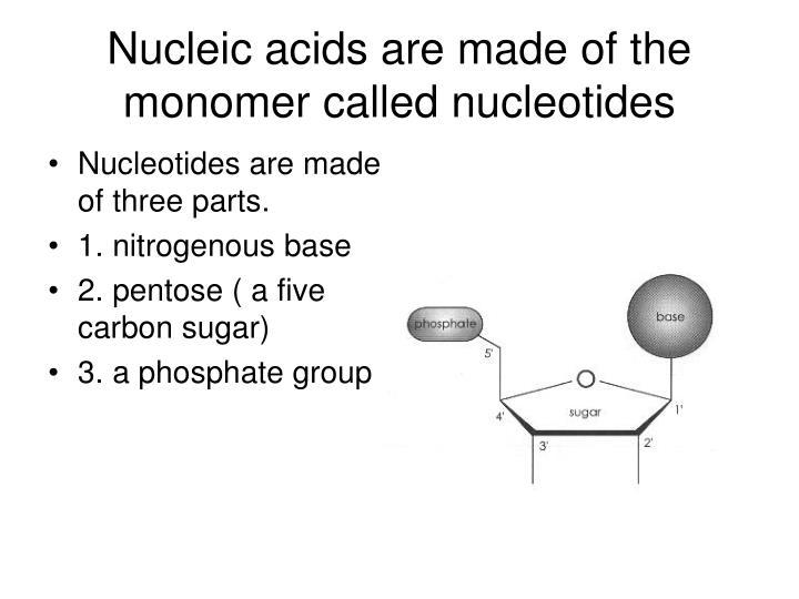 Nucleic acids are made of the monomer called nucleotides