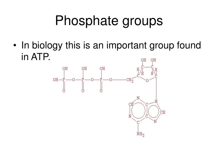 Phosphate groups