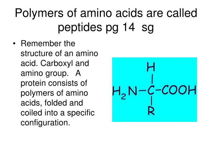 Polymers of amino acids are called peptides pg 14  sg