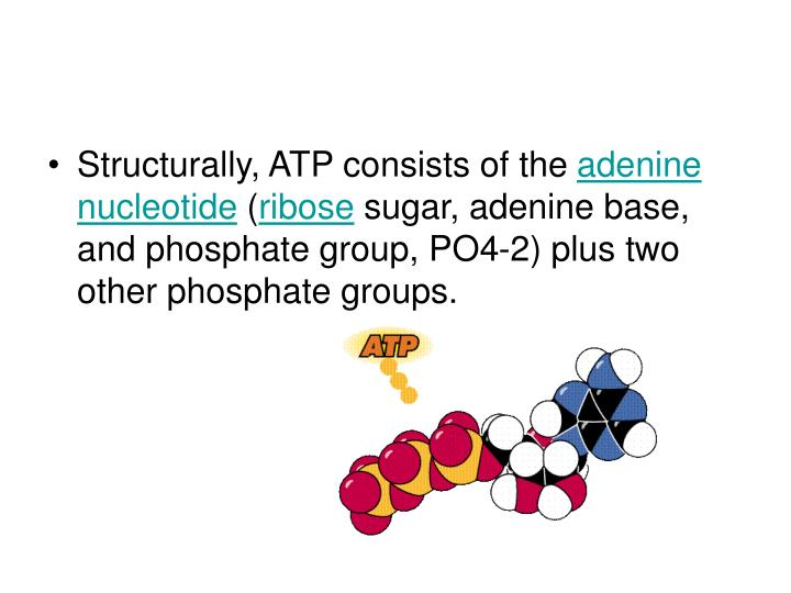 Structurally, ATP consists of the