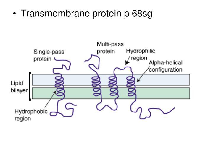 Transmembrane protein p 68sg