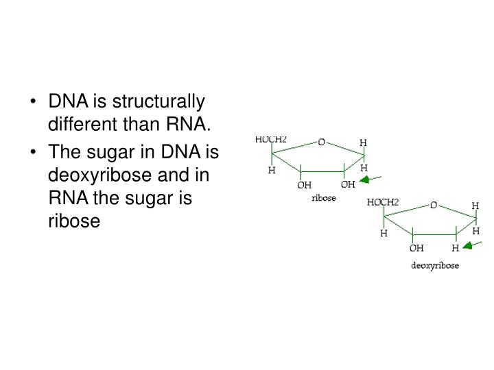 DNA is structurally different than RNA.