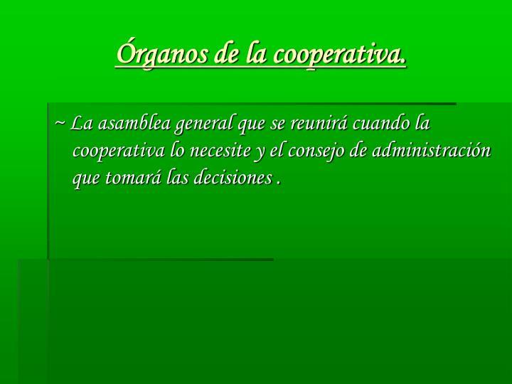 Órganos de la cooperativa.
