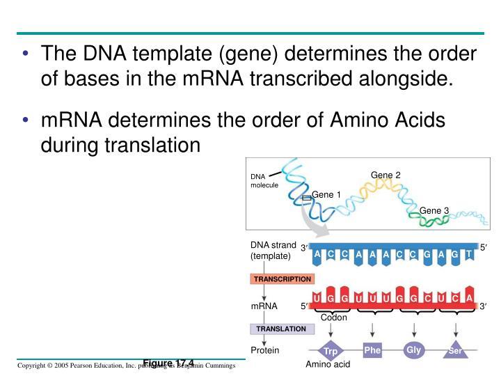 Gene 2
