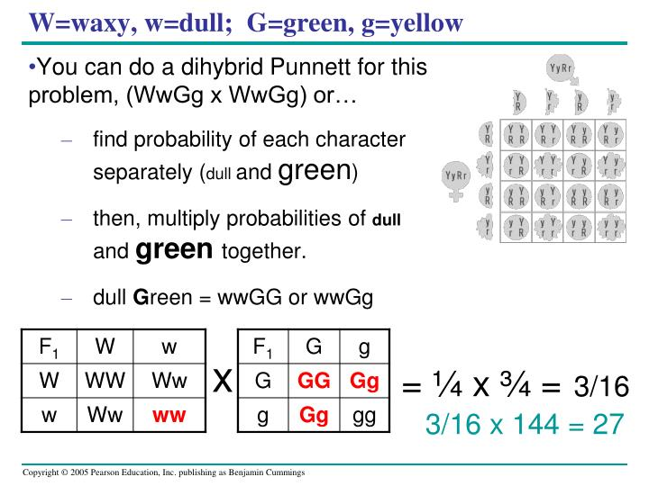 W=waxy, w=dull;  G=green, g=yellow
