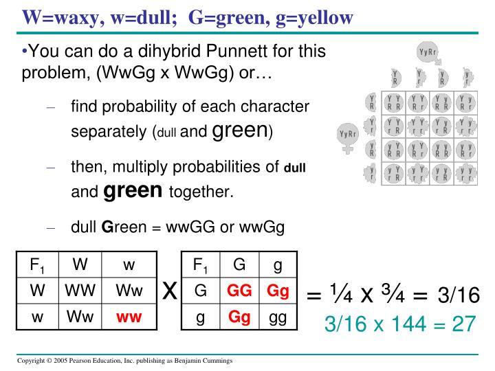 W=waxy, w=dull;  G=green, g=yellow