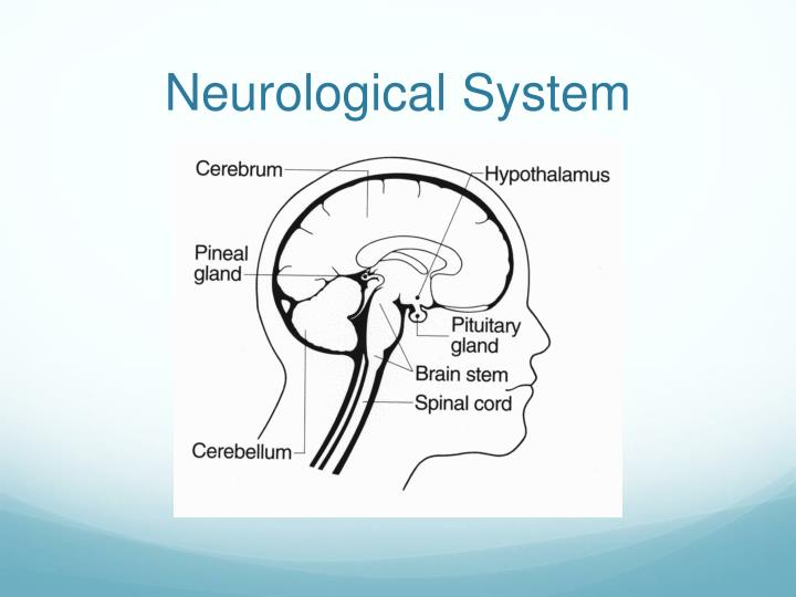 Neurological System