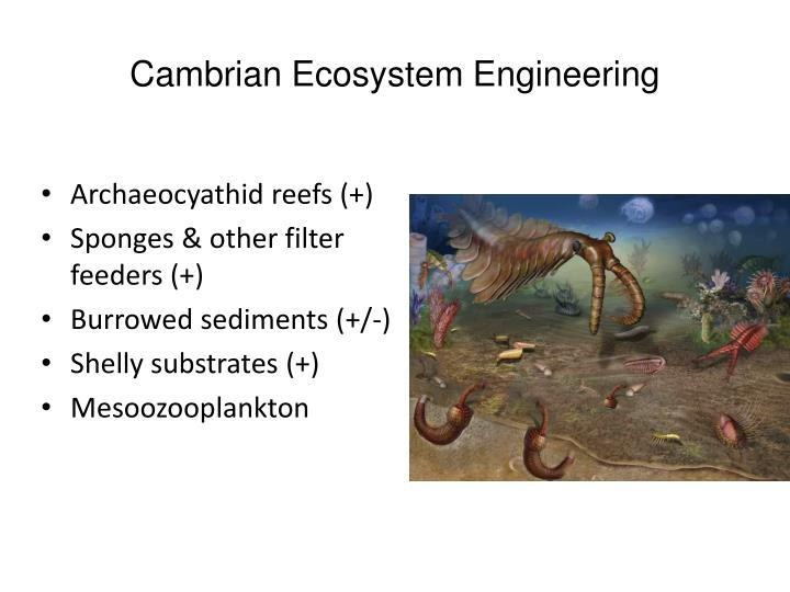 Cambrian Ecosystem Engineering