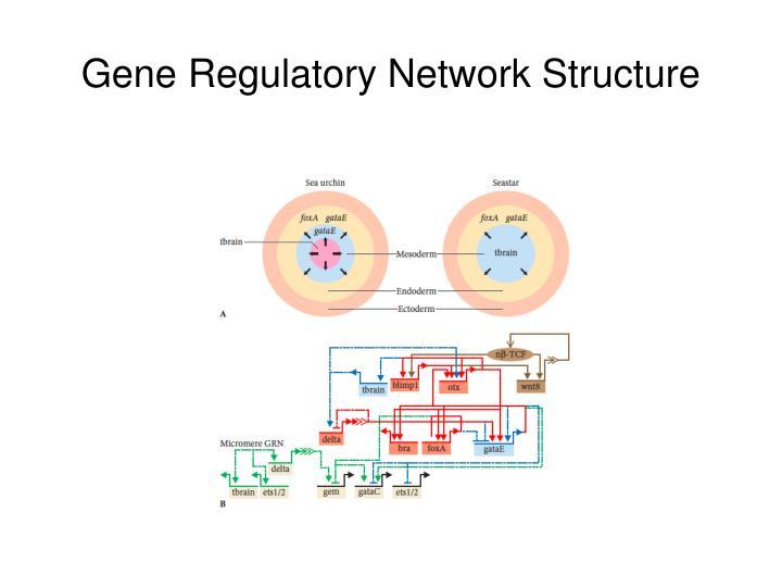 Gene Regulatory Network Structure