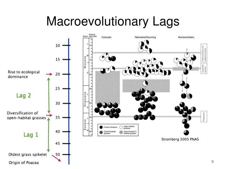Macroevolutionary