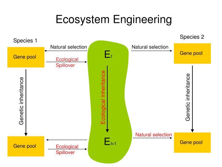 Ecosystem Engineering