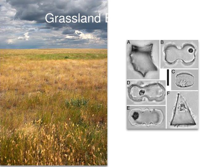 Grassland Evolution