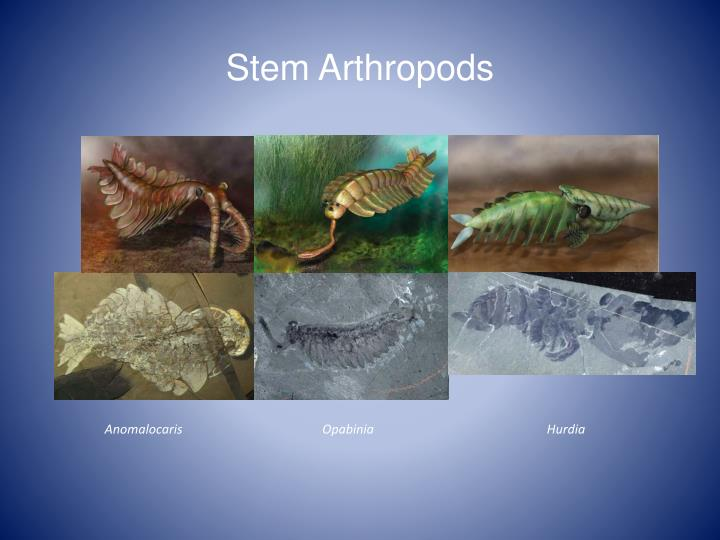 Stem Arthropods