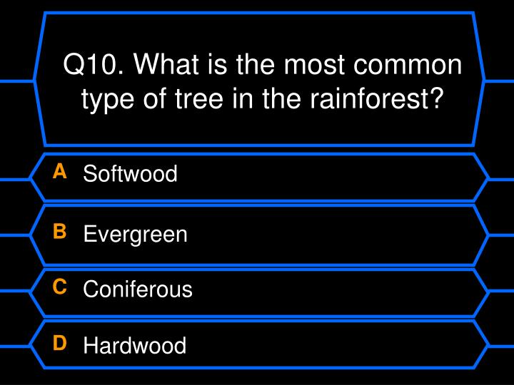 Q10. What is the most common type of tree in the rainforest?