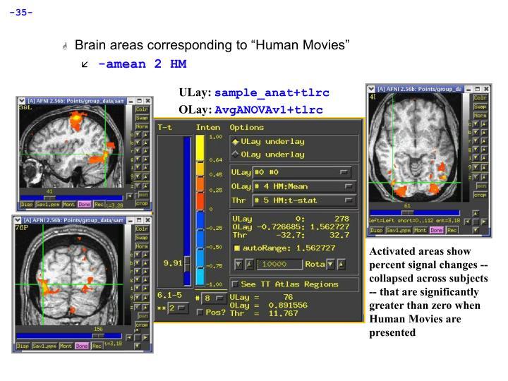 """Brain areas corresponding to """"Human Movies"""""""