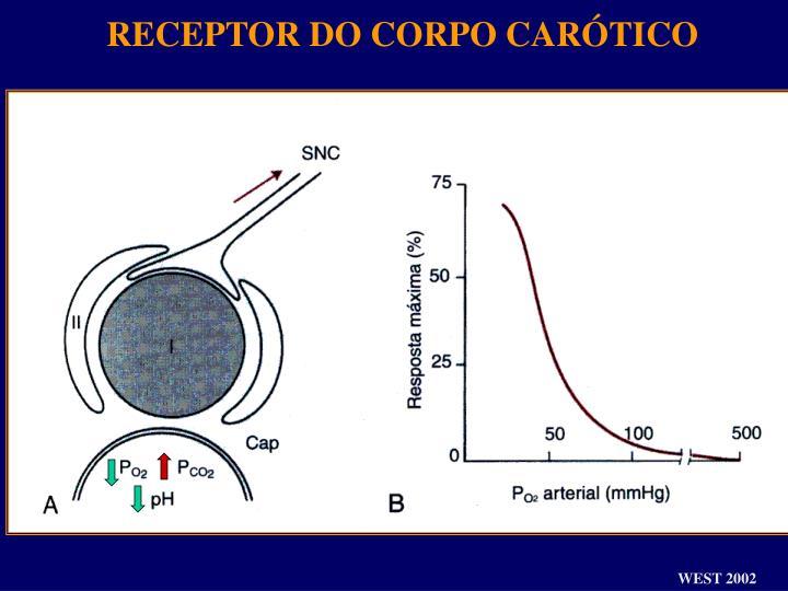 RECEPTOR DO CORPO CARÓTICO