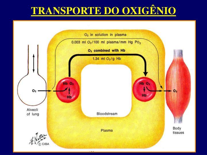 TRANSPORTE DO OXIGÊNIO