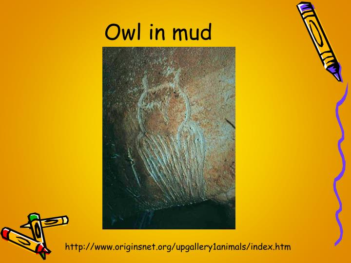 Owl in mud