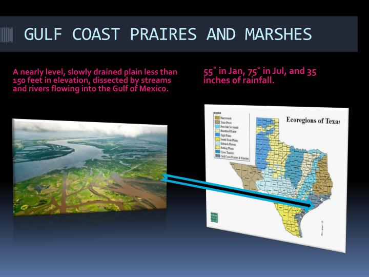 GULF COAST PRAIRES AND MARSHES